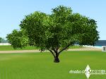 Árbol grande.png