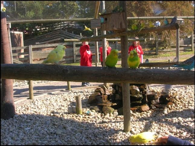 Richmond Metro Zoo 3rd Grade MES Field Trip 080