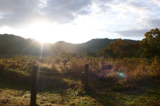 6時半くらいから走っていたので寒かった。太陽が山陰からでてきたよー。暖かい!