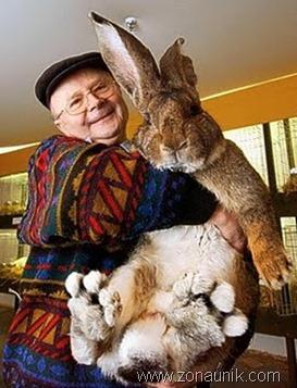 kelinci terbesar