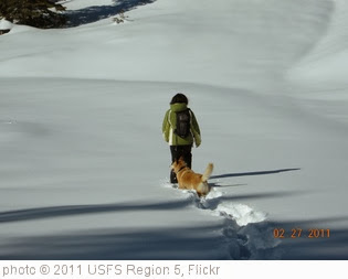 'Fresh Snow Fall' photo (c) 2011, USFS Region 5 - license: http://creativecommons.org/licenses/by/2.0/