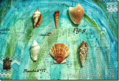 sea shell mm canvas5