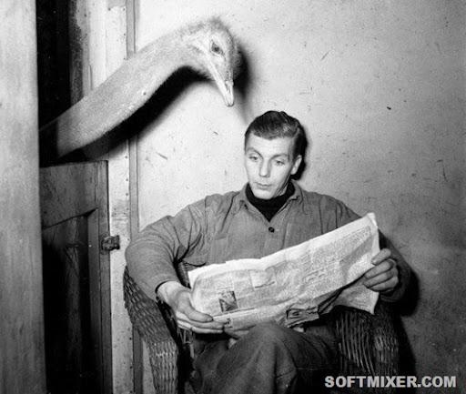 paper_bird