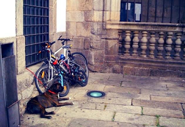 Cao de guarda bicicletas