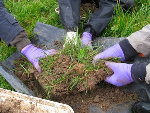 The Soil Biodiversity Group gets stuck into sorting another sample