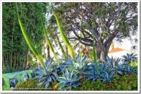 Succulents and More: Huntington Desert Garden, finally