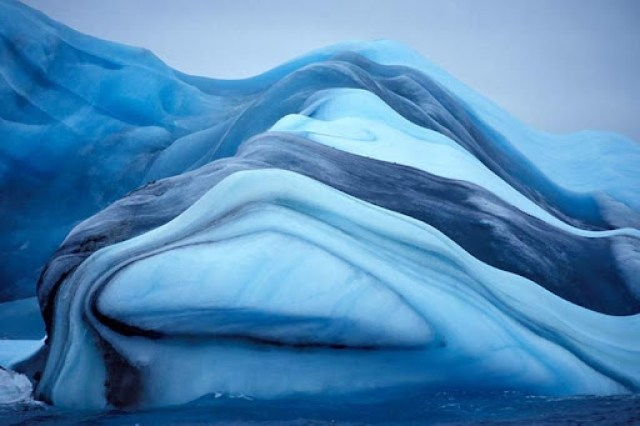 ριγωτό-παγόβουνου-2