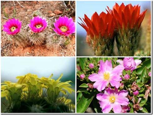 Cactuscollage