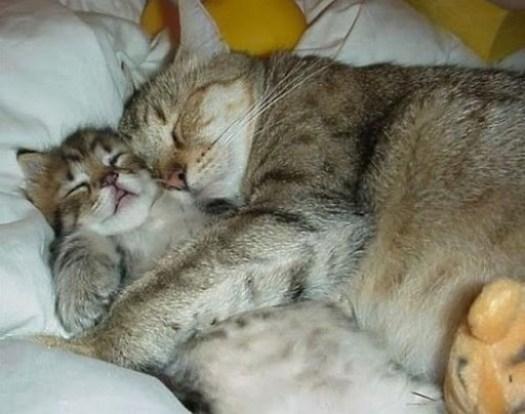 Gato abraza a gatito