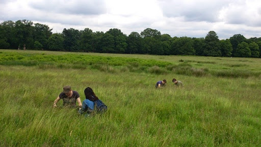 Earthworm Society of Britain members survey for earthworms in grassland in Richmond Park
