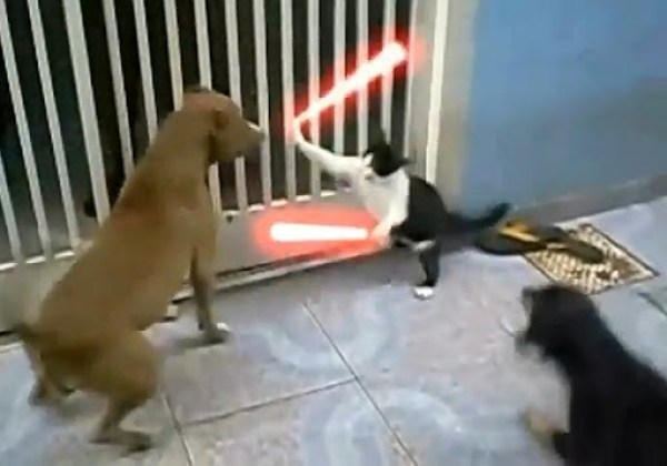 The-Cat-Unleashed