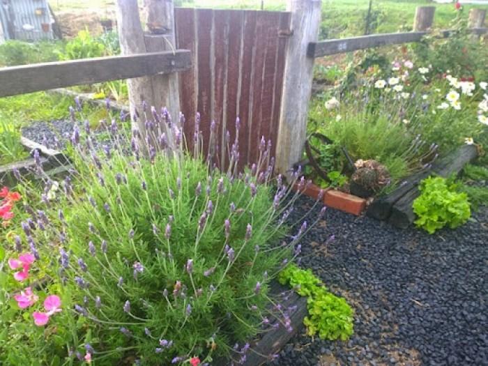 my garden oct 2014 (18)