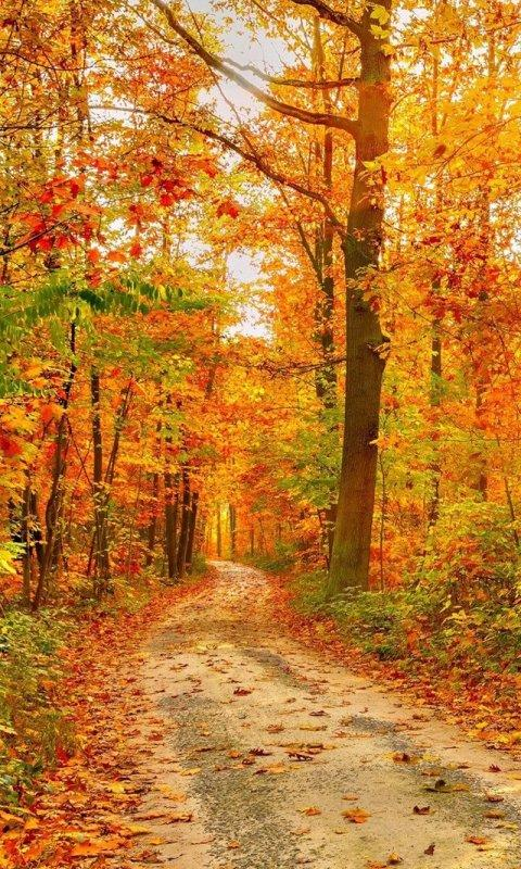 Falling Leaves Hd Live Wallpaper Apk Autumn Live Wallpapers Apk 1 0 Download Free