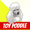 /he/poddle-dogs