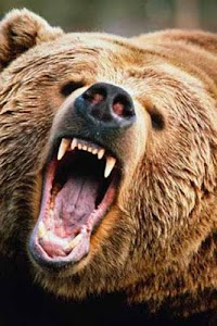 How To Draw Bear Animal screenshot 1