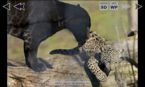 Jaguar Wallpaper Gallery screenshot 2