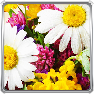Flowers Live Wallpaper download