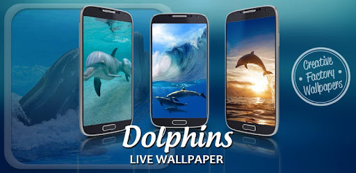 Dauphins Fond D Ecran Anime Pour Pc Windows Telechargement