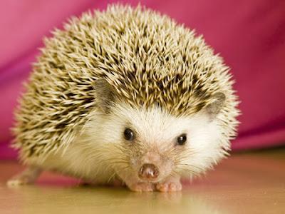 ubuntu hoary hedgehog 5.04