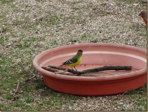 catalina birds and_019