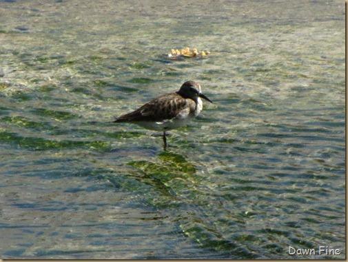 sweetwater wetlands_198