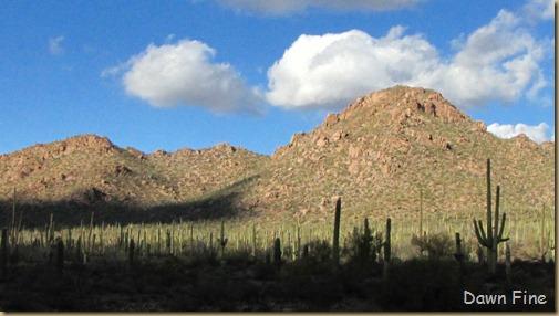 Desert museum_536