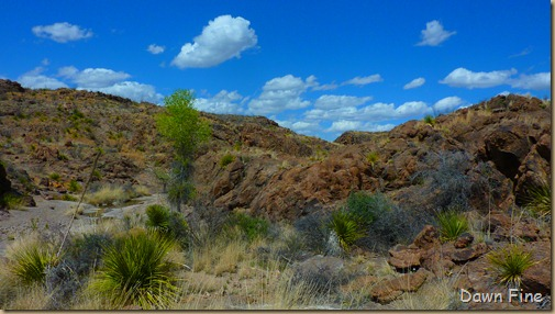 Big Bend Ranch State park_091
