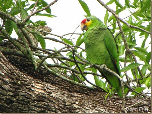 Birding valley nature center_009