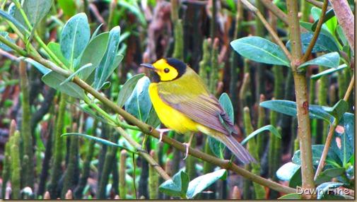 fallout birds padre island_014