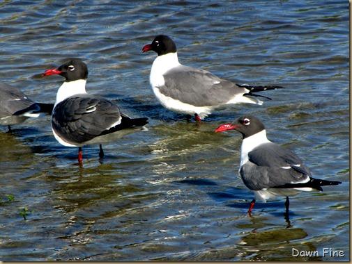 big sit birds_037