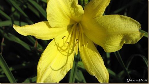 loris garden_20090718_044