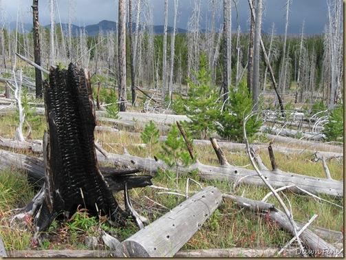 Yellowstone Jeffs pics_20090906_063