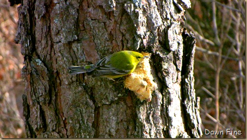 Birds and bark butter_032