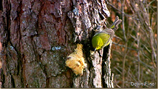 Birds and bark butter_027
