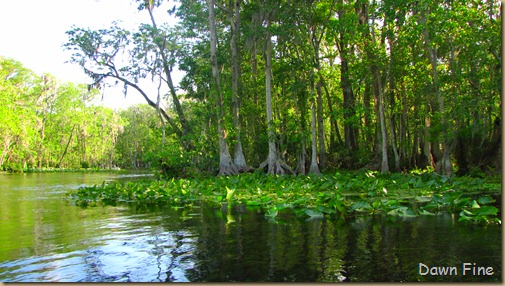 Silver Springs State Park_014