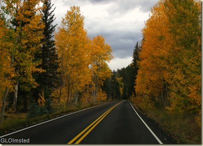 Golden aspen line the road home from Walhalla Plateau North Rim Grand Canyon National Park Arizona
