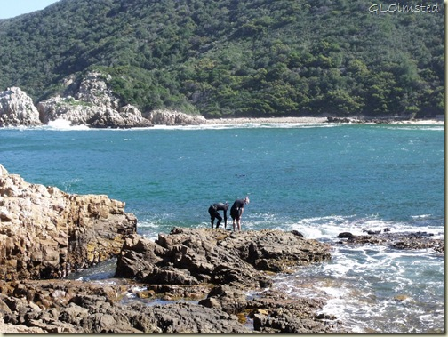 Divers Lower Eastern Head Knysna Garden Route Western Cape South Africa