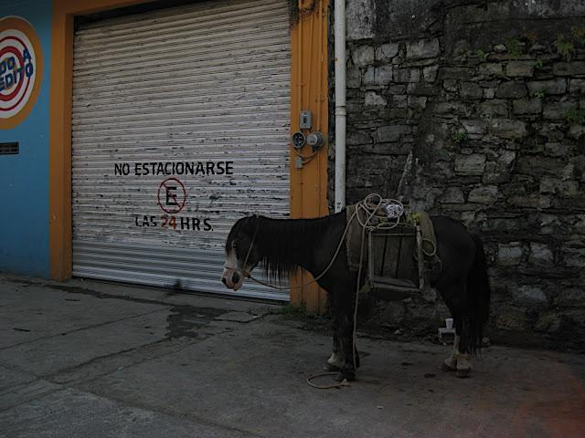 Burro estacionado en Xilitla