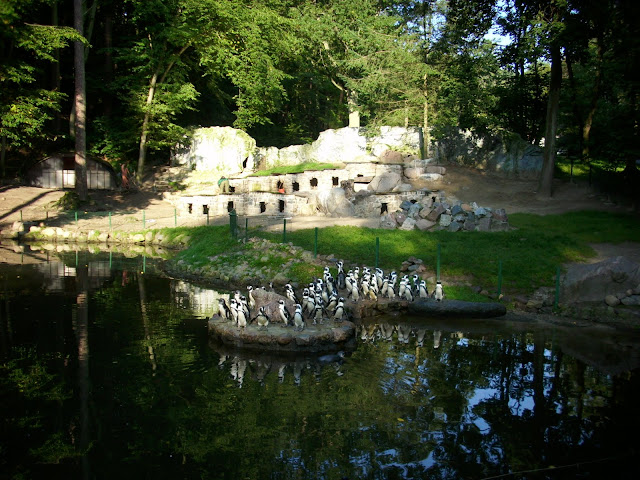 Pingwiny tońce - Zoo Oliwa