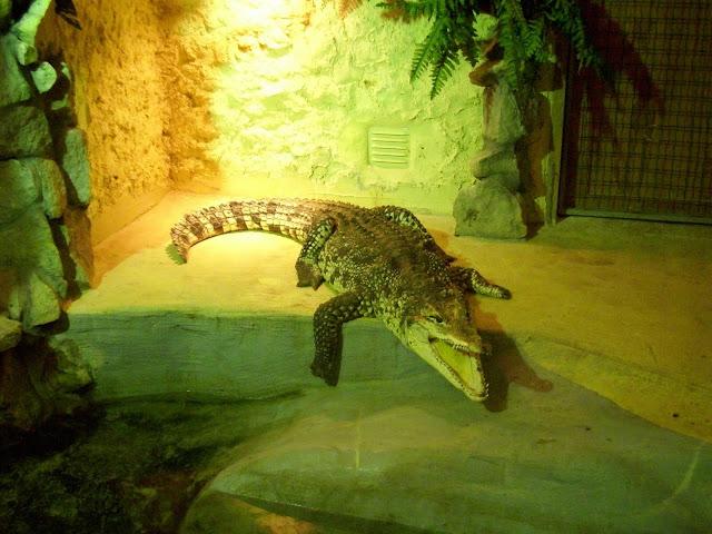 Jak twierdzi większość zwiedzających - sztuczny krokodyl