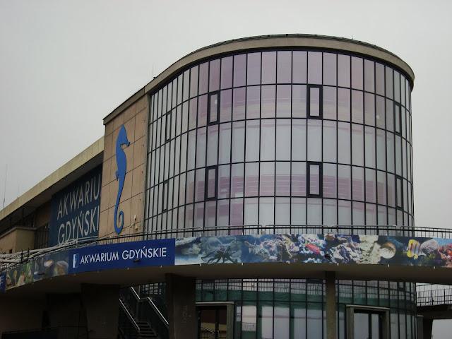 Rotunda Akwarium Gdyńskiego - z lewej największy konik morski w Polsce