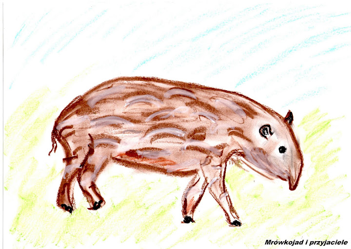 Mały tapir anta