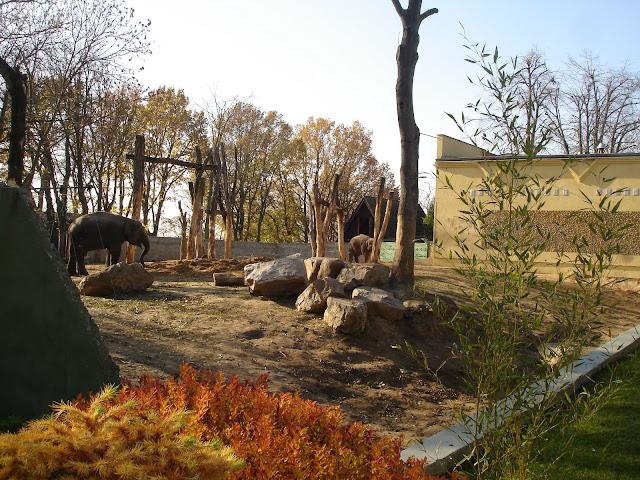 Obecni mieszkańcy słoniarni