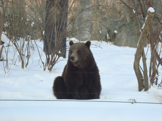 Niedźwiedź siedzi...