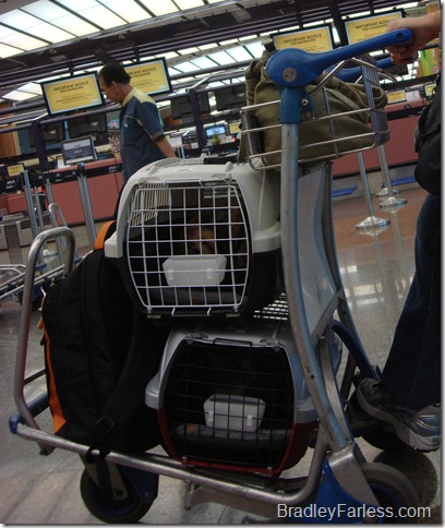 Cats in Changi Airport
