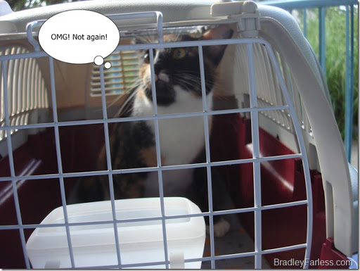 Marble in her carrier, on the way to the vet.
