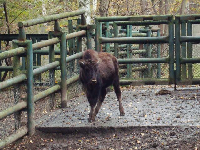 Biedronka - zdjęcie z października 2010