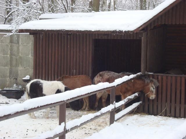 Kuce na śniegu