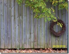 Fran's Fall Photos 052
