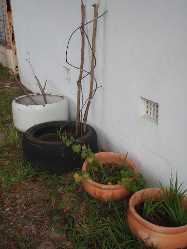 Little container garden